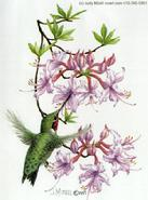 Hummingbird by Judy Mizell