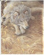 Wolves by Kathy Goff