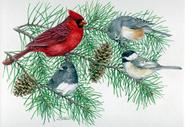 Winter Birds by Judy Mizell