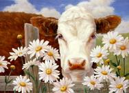 cow, daisies, fence