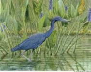Blue Heron by Judy Mizell
