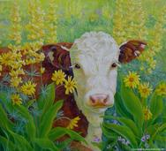 brown and white cow in yellow lupine flowers