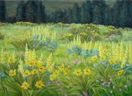 Field of Balsam Root and Lupine